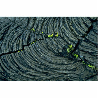 Lava with patterns, a typical pahoehoe acrylic cut out
