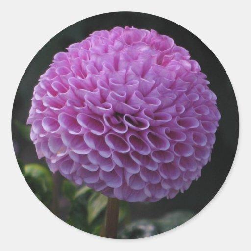 Lavander Dahlia Round Sticker