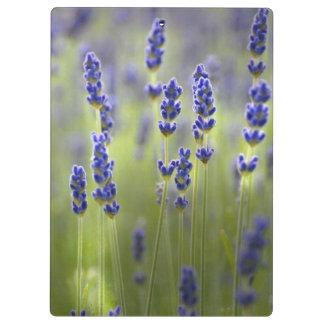 Lavander Flowers Nature Lovely Clipboard