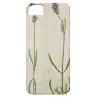 Lavandula officinalis (Old English Lavender), c.15 Barely There iPhone 5 Case
