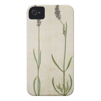 Lavandula officinalis (Old English Lavender), c.15 Case-Mate iPhone 4 Case