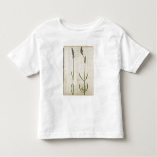 Lavandula officinalis (Old English Lavender), c.15 Toddler T-Shirt