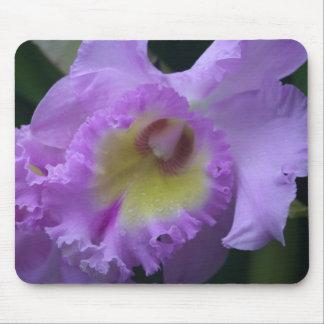 Lavendar Iris Mousepad