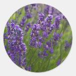 Lavendar | Lavendel Round Sticker