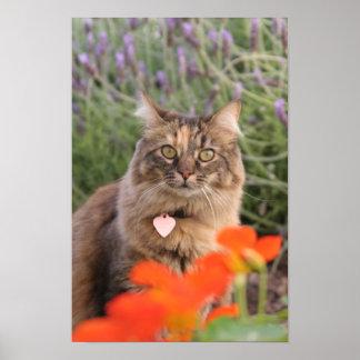 Lavendar, Nasturtium,  and a Tortoiseshell Cat Poster