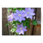 Lavendar Purple Clematis Greeting Card