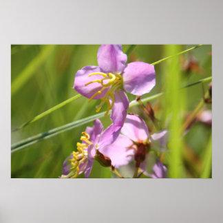 Lavendar wild flower poster