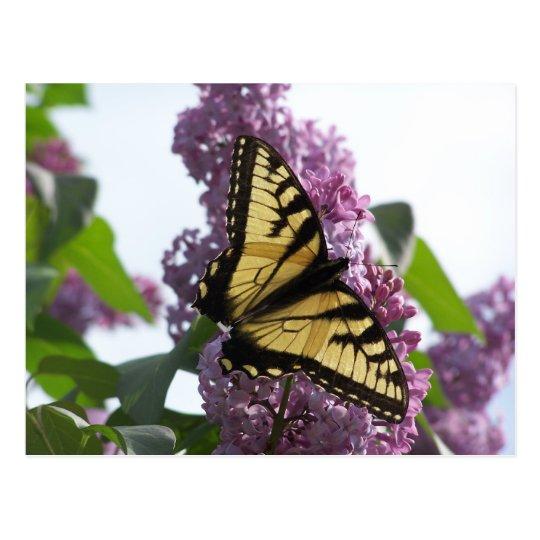 Lavender Afternoon Postcard