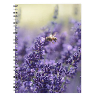 Lavender and Bees Notebooks