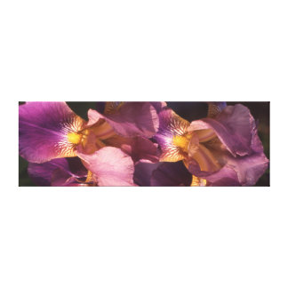 Lavender and Gold Bearded Dutch Iris Canvas Print