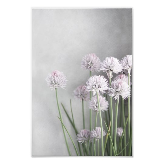 Lavender And Green Chives On Soft Grey Photo