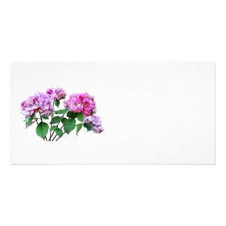 Lavender and Rose Hydrangeas Photo Cards