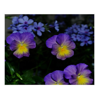 Lavender and Yellow Pansies Print