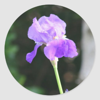 Lavender Bearded Iris stickers