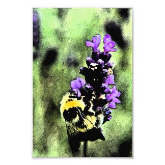 Lavender Bumblebee Fresco Photographic Print