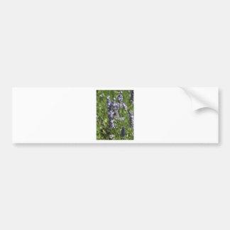 Lavender Bumper Stickers