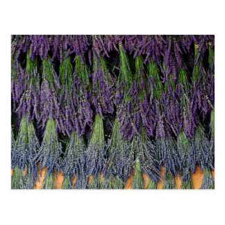 Lavender Bunches on a Drying Rack Postcard