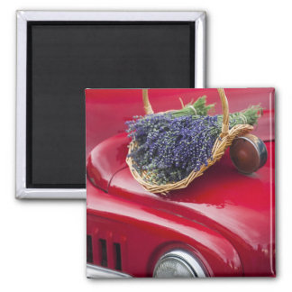 Lavender bunches rest on old farm pickup truck magnet