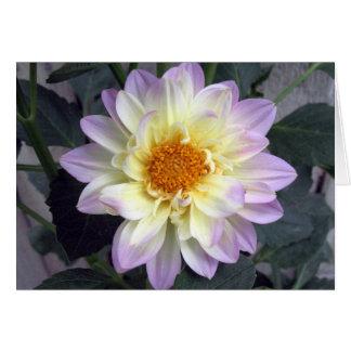 Lavender Creme Dahlia Card