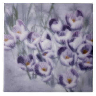 Lavender Crocus Patch Tile