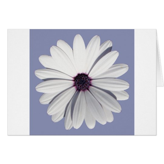 Lavender Daisy Card