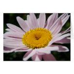 Lavender daisy cards