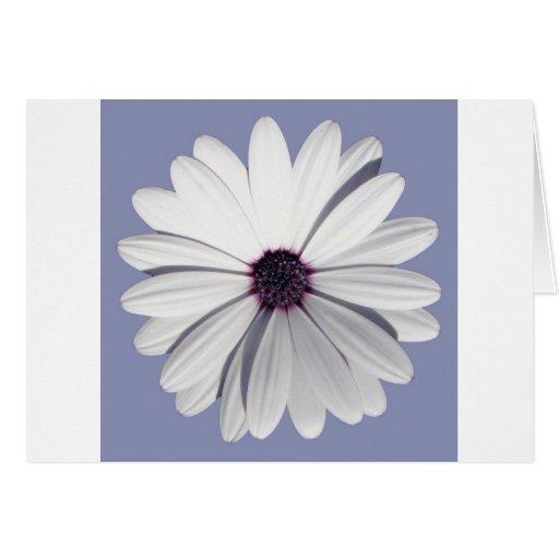 Lavender Daisy Greeting Card