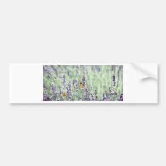 Lavender Daze Bumper Sticker