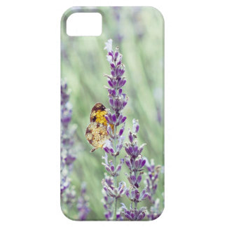 Lavender Daze iPhone 5 Covers
