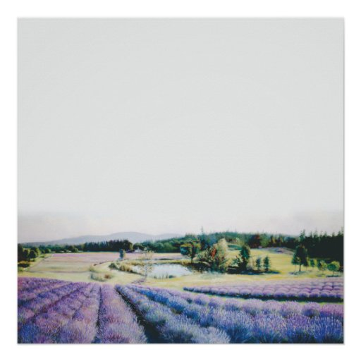 Lavender Farm on San Juan Island by Bryn Barnard Poster