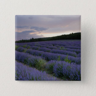 Lavender field at sunset 15 cm square badge