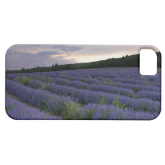 Lavender field at sunset case for the iPhone 5