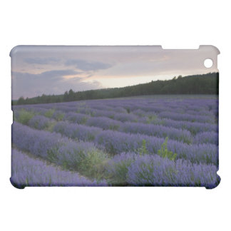 Lavender field at sunset iPad mini cases