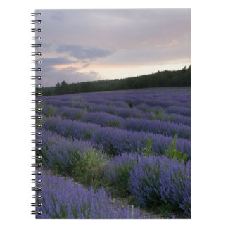 Lavender field at sunset notebook