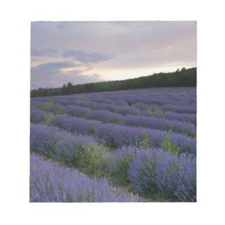 Lavender field at sunset notepad