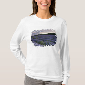 Lavender field at sunset T-Shirt