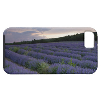 Lavender field at sunset tough iPhone 5 case