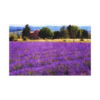 Lavender field Canvas Prints