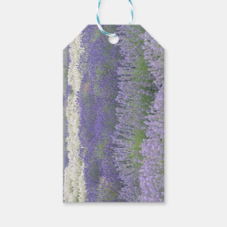 Lavender Field Gift Tag