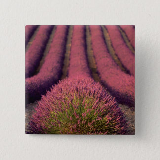 Lavender field in High Provence, France 2 15 Cm Square Badge