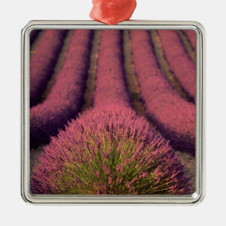 Lavender field in High Provence, France 2 Christmas Ornament