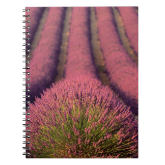 Lavender field in High Provence, France 2 Spiral Notebook
