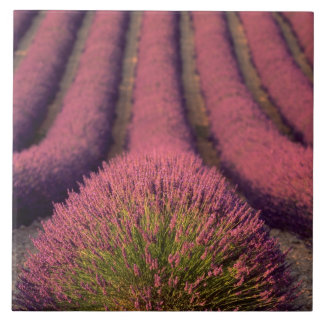 Lavender field in High Provence, France 2 Tile