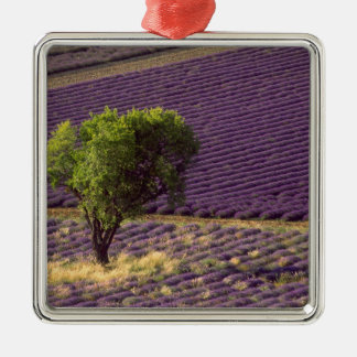 Lavender field in High Provence, France Christmas Ornament