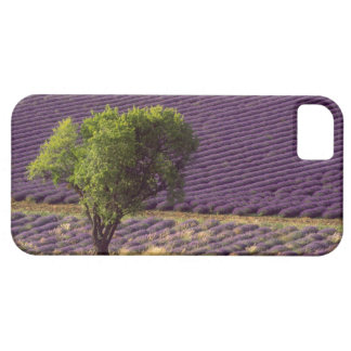 Lavender field in High Provence, France iPhone 5 Cases