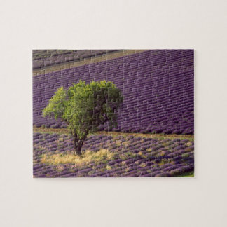 Lavender field in High Provence, France Jigsaw Puzzle