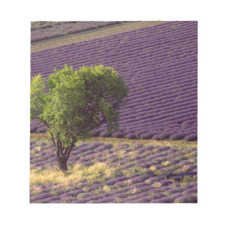 Lavender field in High Provence, France Notepad