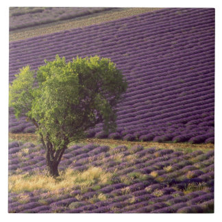 Lavender field in High Provence, France Tile
