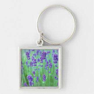 Lavender Field Key Ring