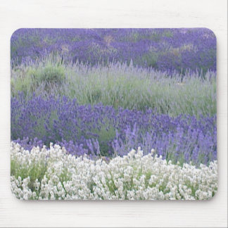 Lavender Field Mousepad